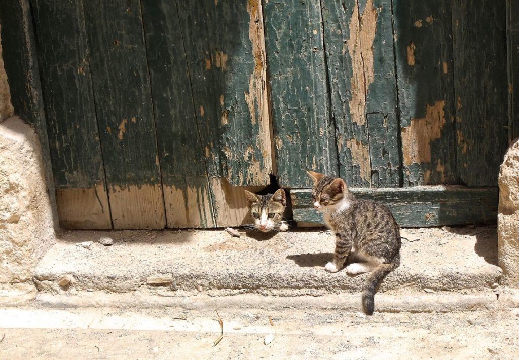 chatière électronique