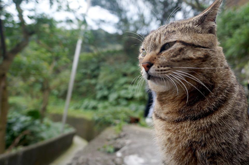 porte automatique pour les chats