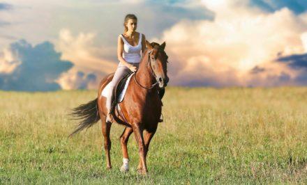 transporter un cheval