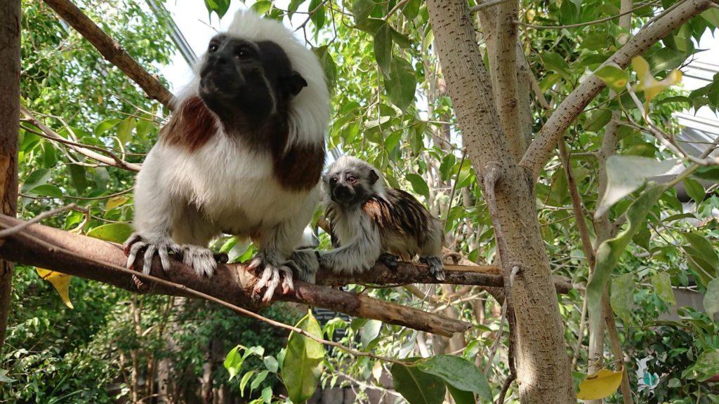 Fiche métier Soigneur en parc animalier