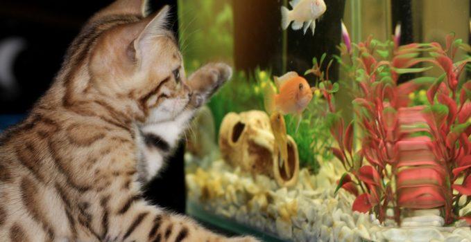 Installer un aquarium