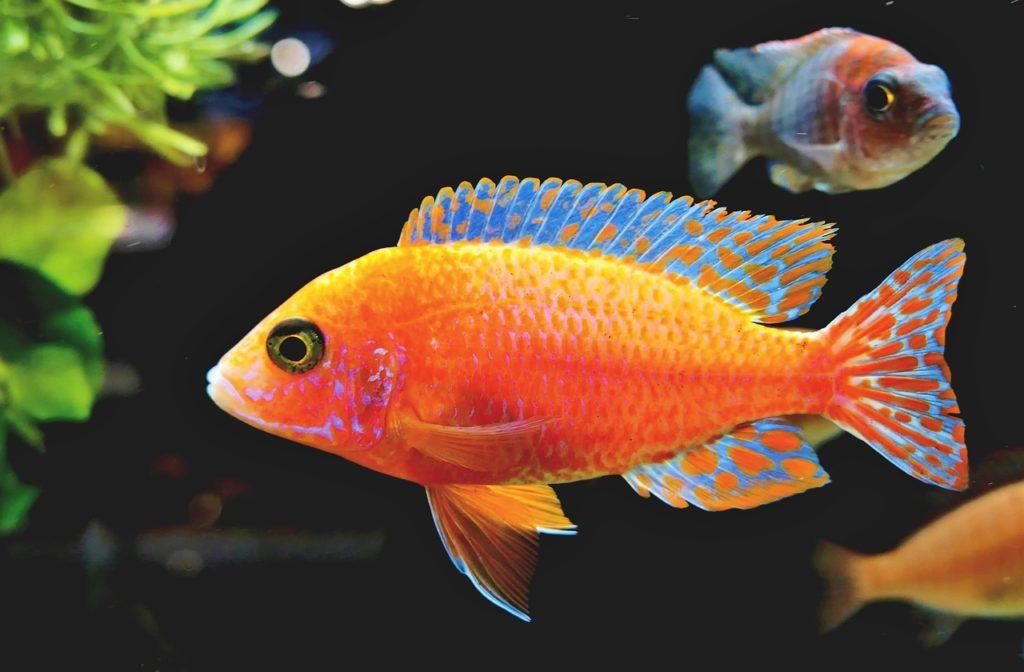 Prendre soin de son aquarium