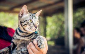 Voyager avec un chat aux Etats-Unis