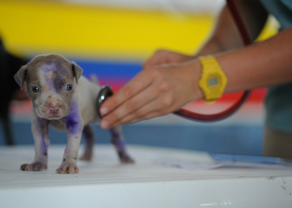 avant d'adopter un chien