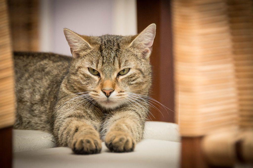 chat avec distributeur de croquettes pour chat
