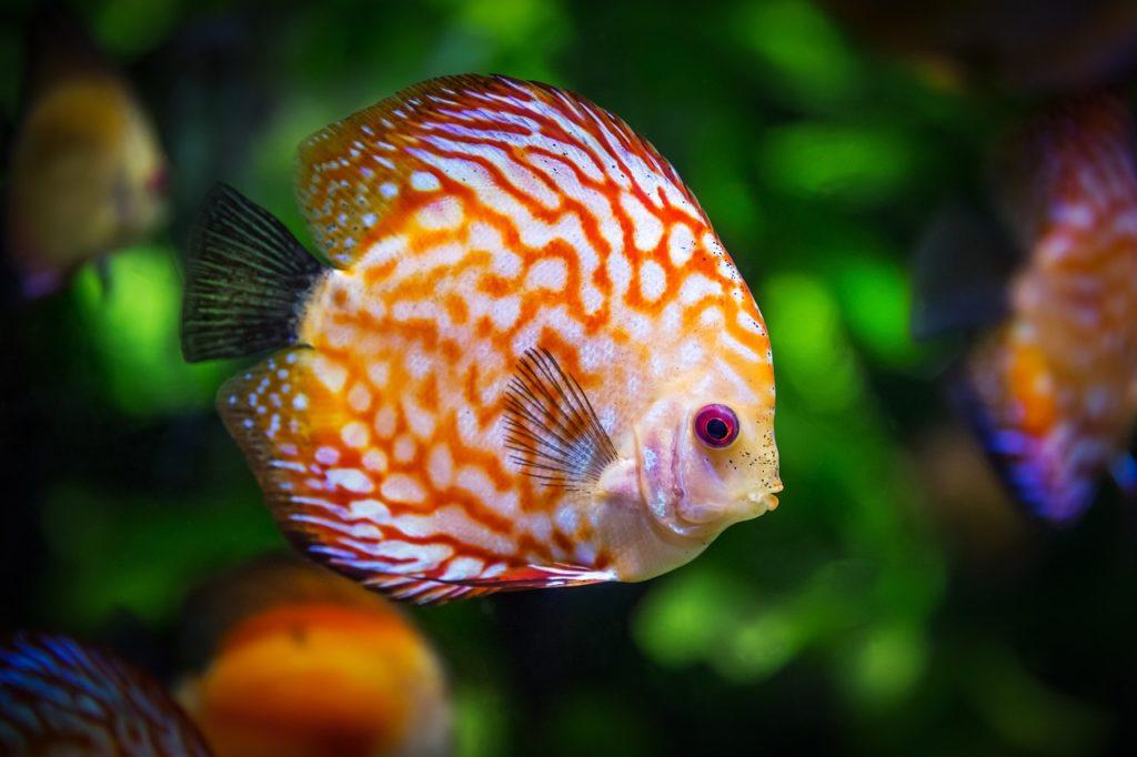 installation d'un aquarium pour ses poissons