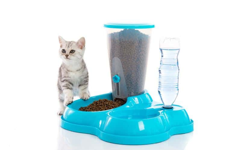 machine de distribution de croquettes pour chat
