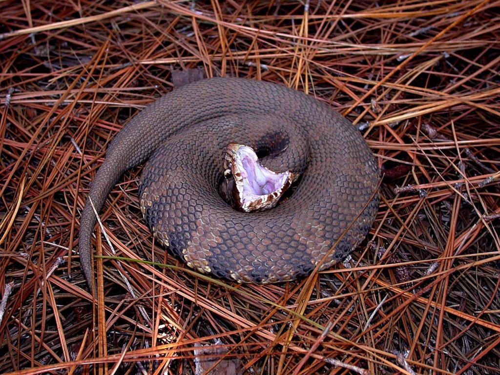 morsure de serpent sur un chien