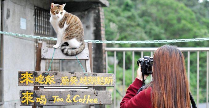 s'organiser pour partir en vacances avec son chat