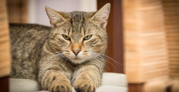 conseils pour prendre soin de son chat