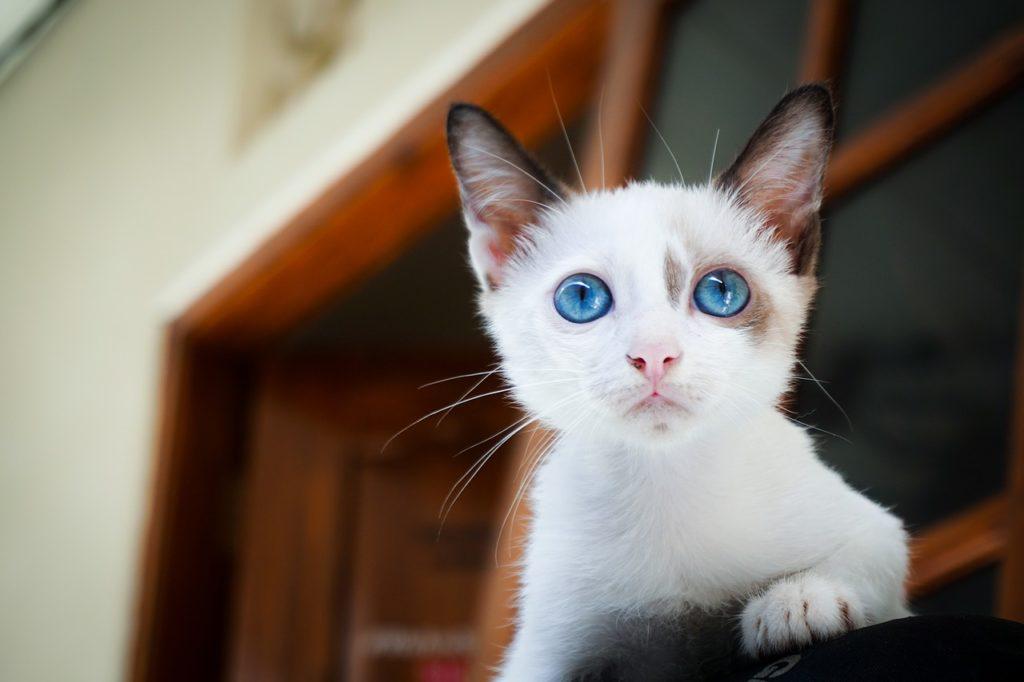 prendre soin de son chat à moindre coût