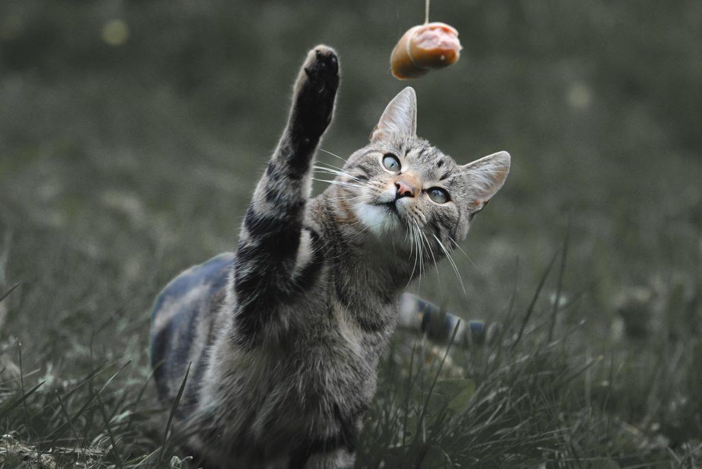 compléments alimentaires pour chat