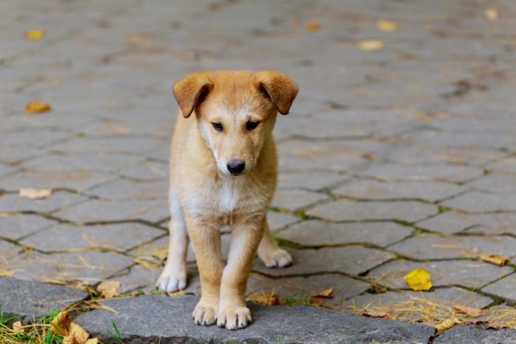 conseils éducatifs avec chien abandonné