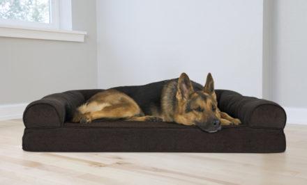 panier orthopédique pour chien