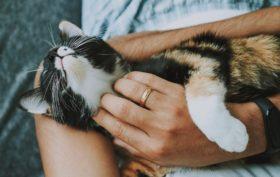 soins essentiels chat