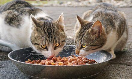 alimentation pour chat