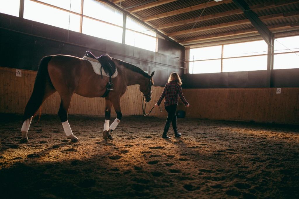 assurer un cheval