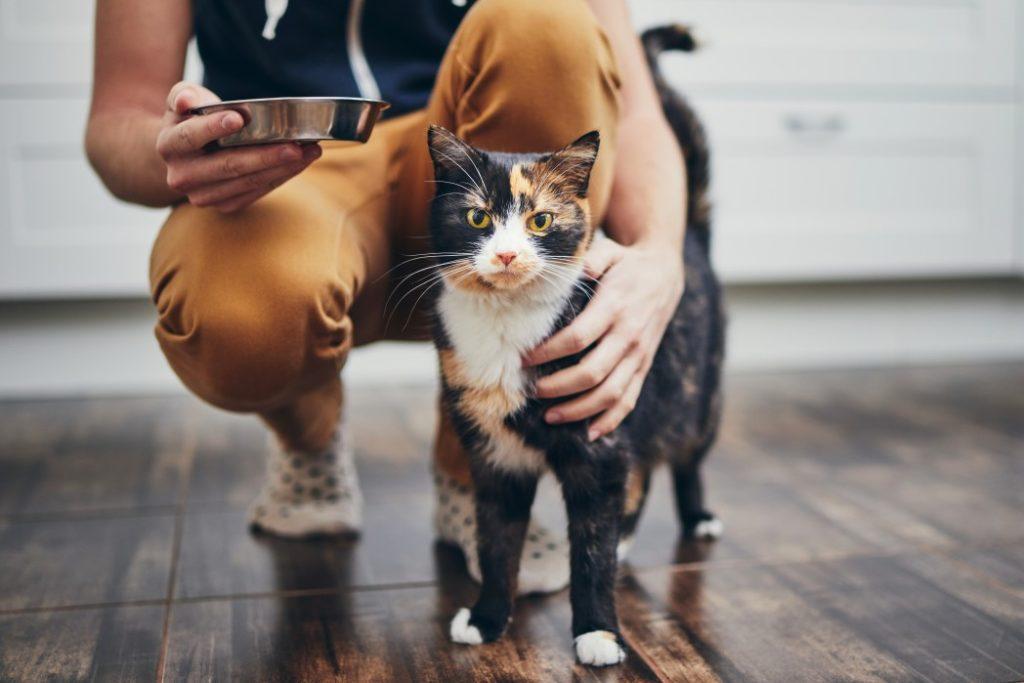besoins d'un chat
