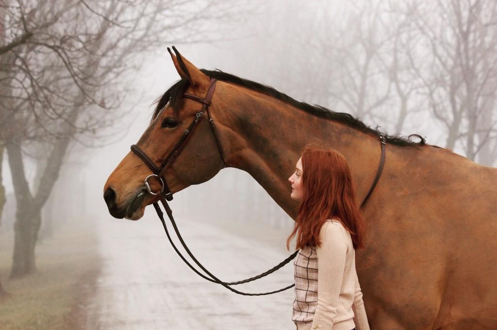 choisir un mors de cheval