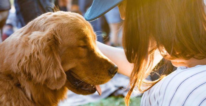 prendre soin d'un nouveau chien