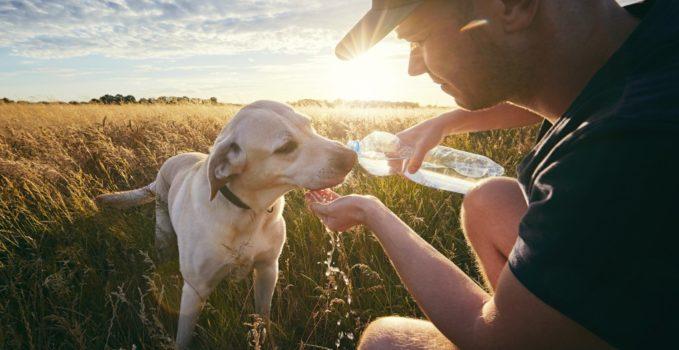 soigner le diabète du chien