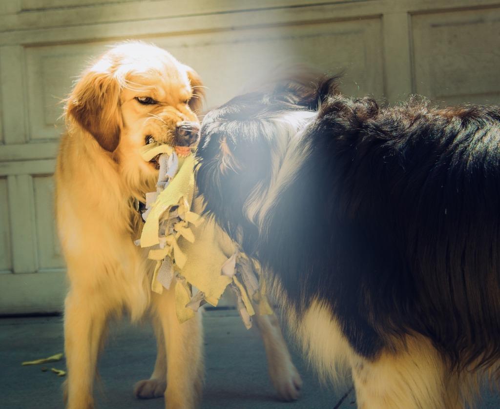attention du chien