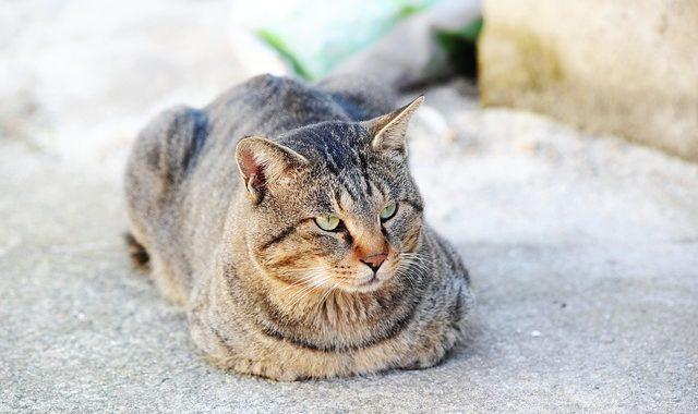 chat qui souffre