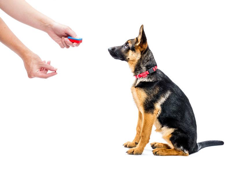dressage facile de chien