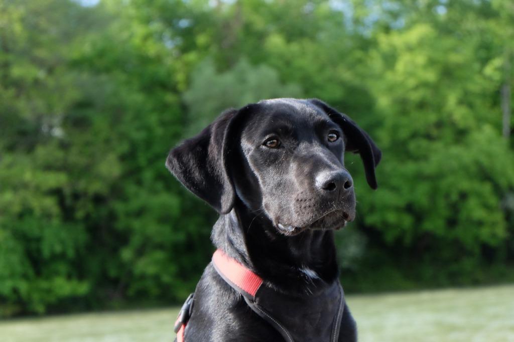 gérer anxiété chiens