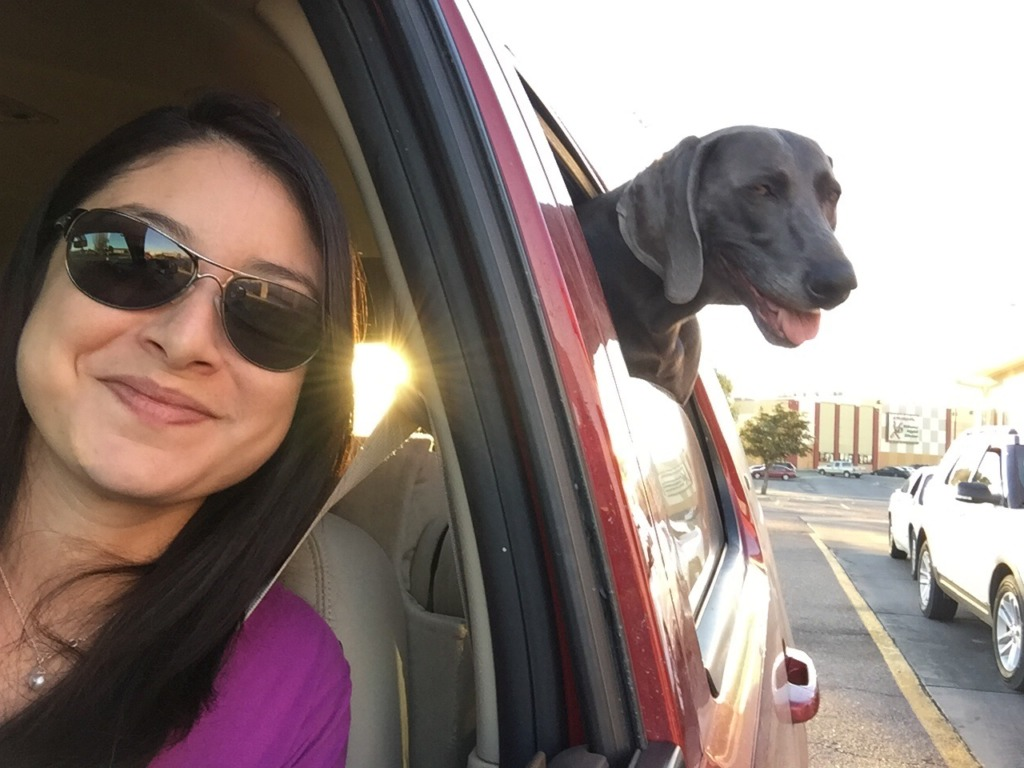 mal de transport chien