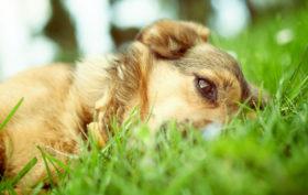 animaux et punaises de lit