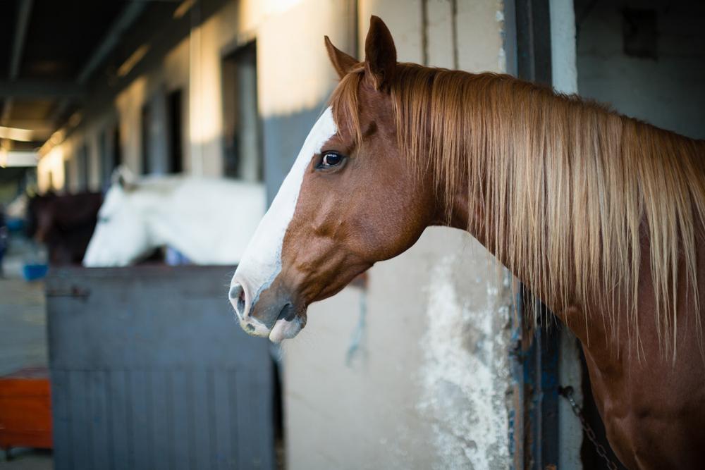 prendre soin du cheval