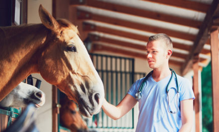 santé du cheval