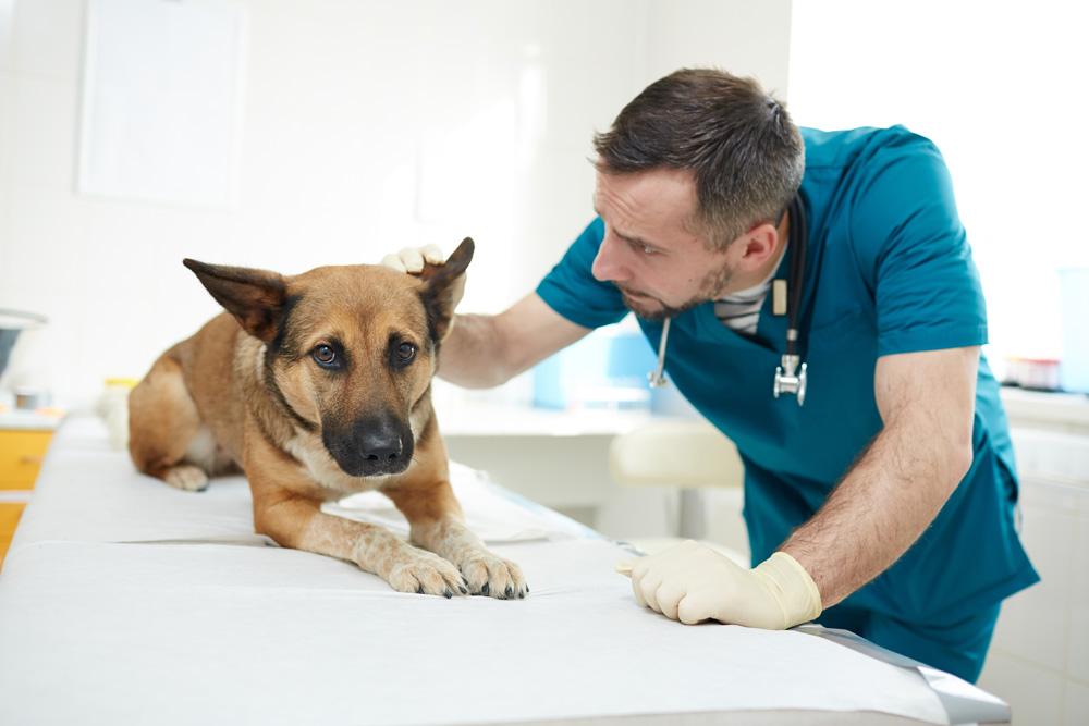 agencement clinique vétérinaire