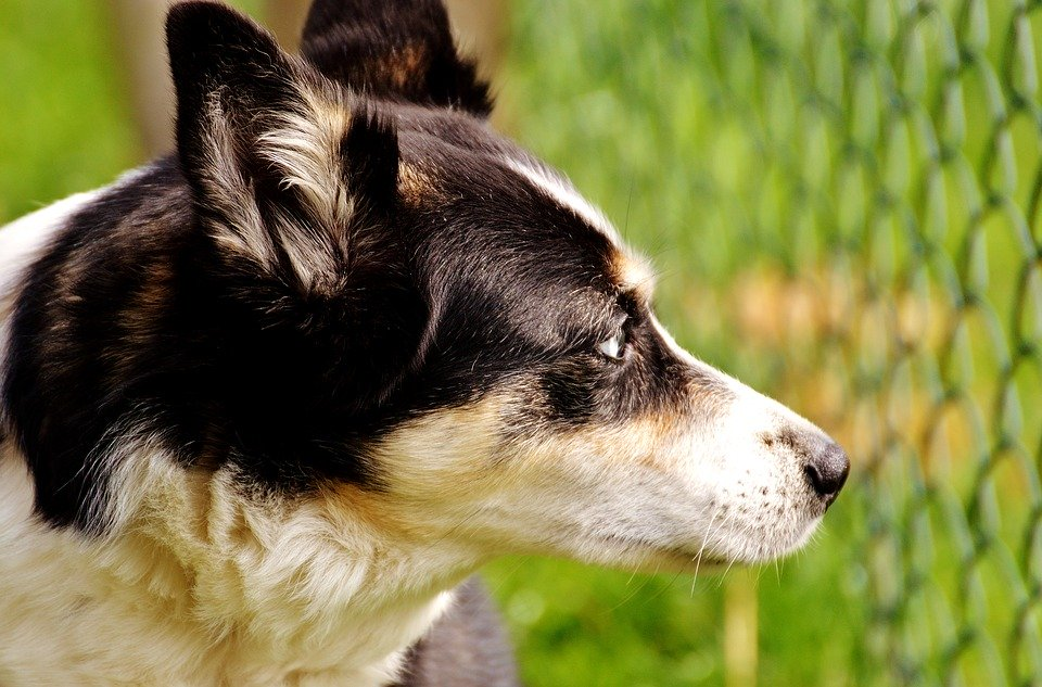 solutions chien fugueur