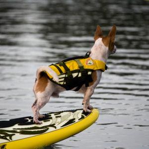 sauvetage pour chien