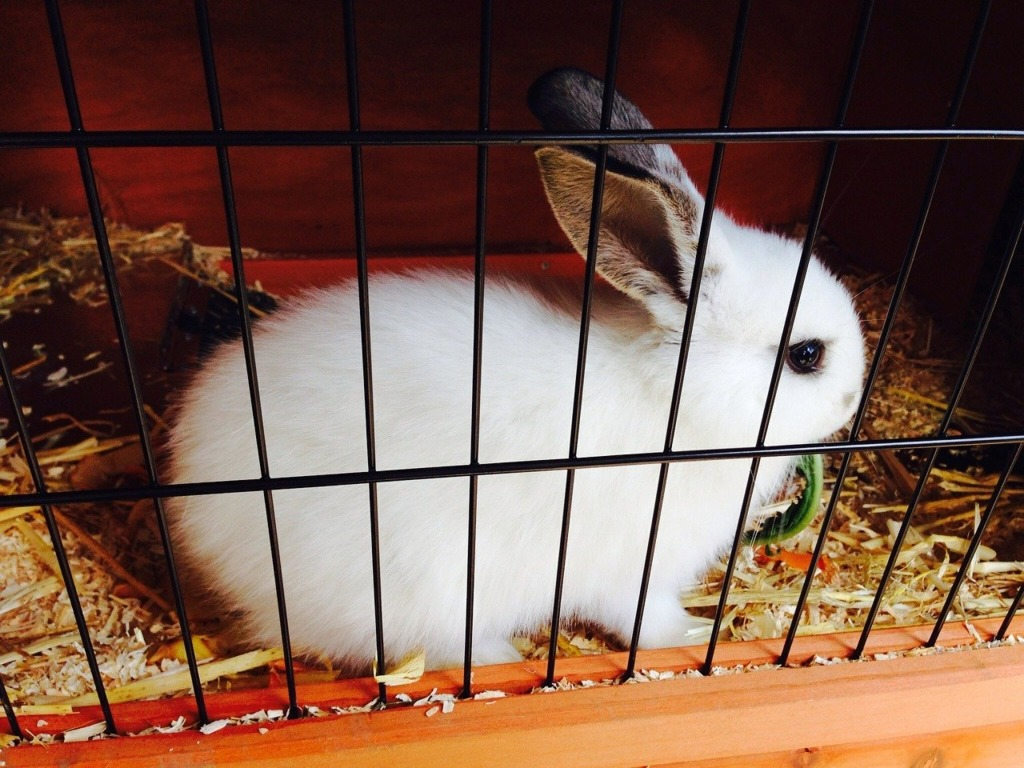 cage lapin appartement