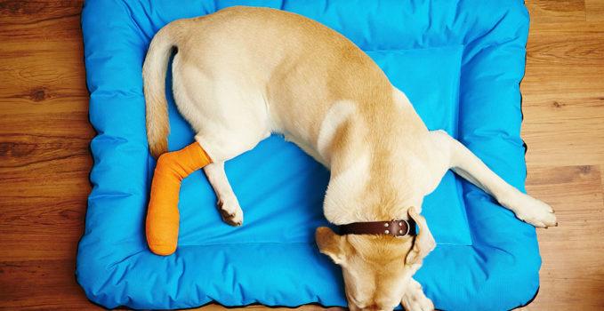 couverture assurance animale