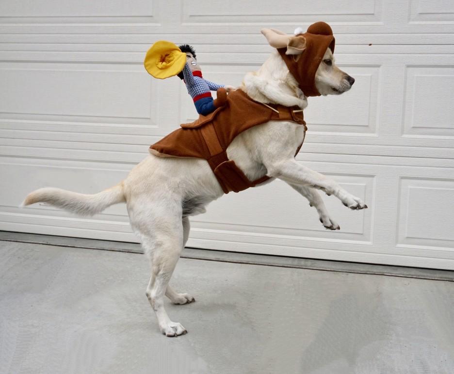 déguisement pour chien