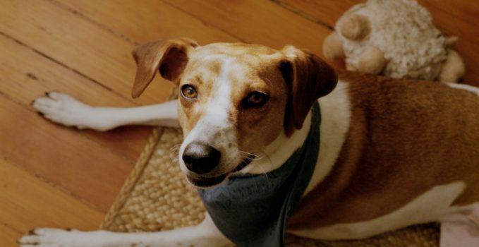 nom pour chien