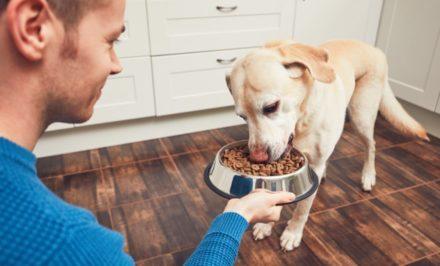 nourriture bio animaux