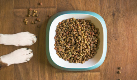 probiotique chiens