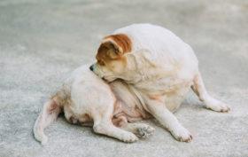 soigner démangeaison animal