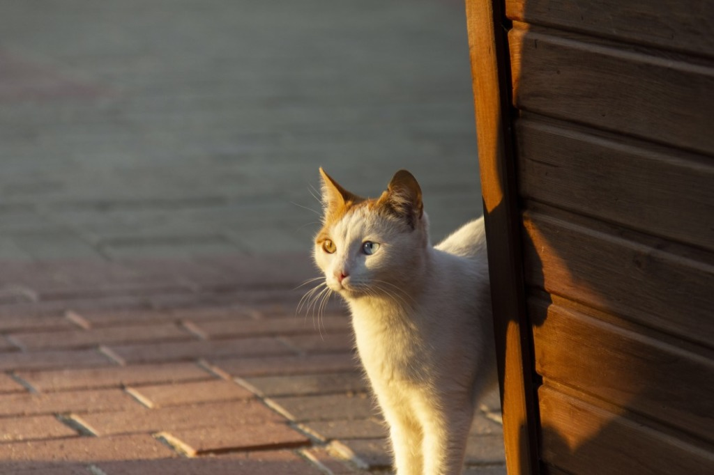 soigner démangeaison chat