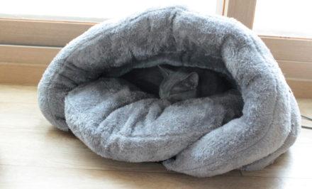 accessoires chat
