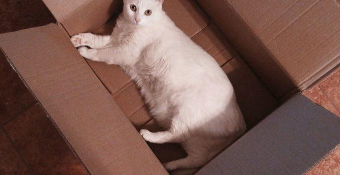 déménagement avec chat