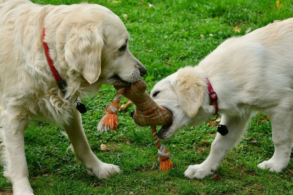 choisir un cadeau pour chien