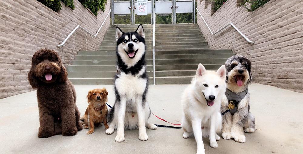 catégorie chiens