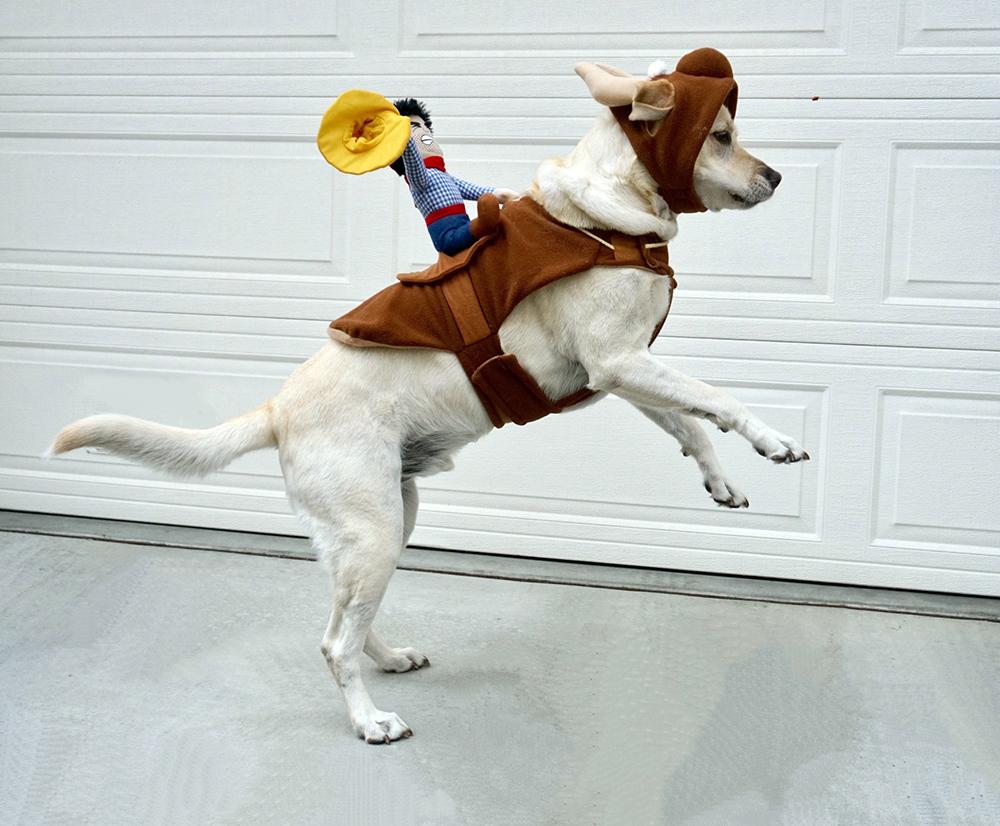 déguisement halloween chien