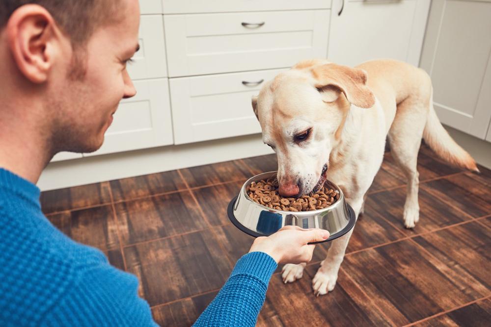 nourriture chien